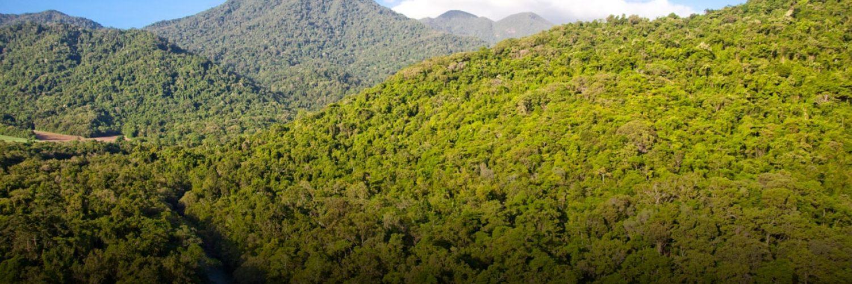 Mt Demi  Rainforest