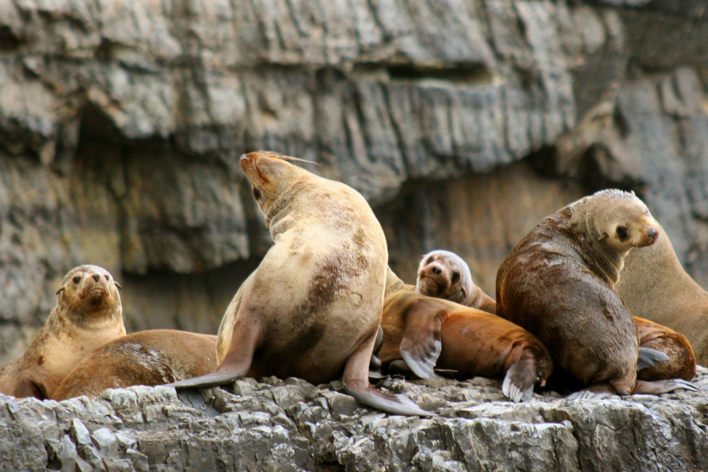 Bruny Island: Robbenkolonie