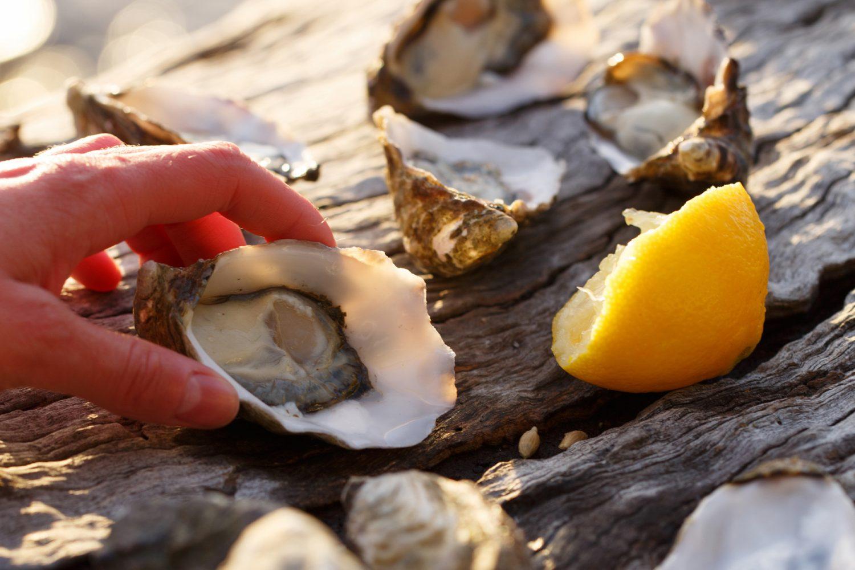 Frische Austern auf Bruny Island