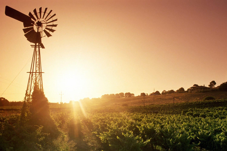 Weinregion Barossa Valley