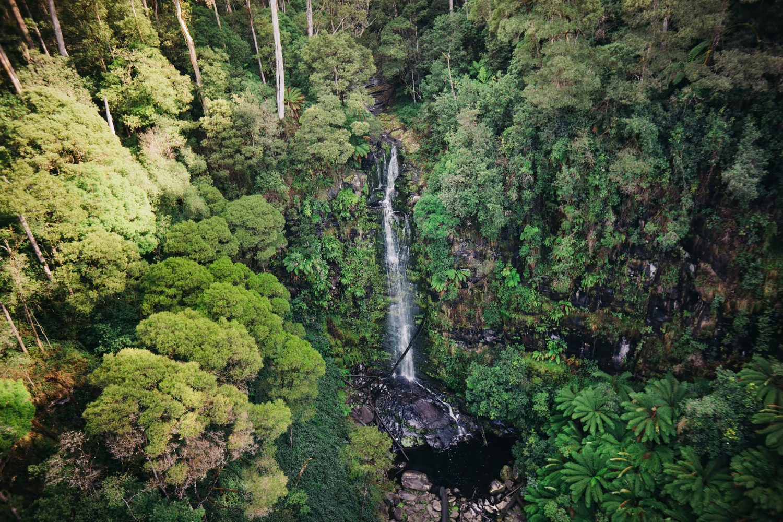 Entlang der Great Ocean Road können Sie durch den Regenwald mit seinen Riesenfarnen spazieren und zauberhafte Wasserfälle, wie die Erskine Falls, bestaunen.