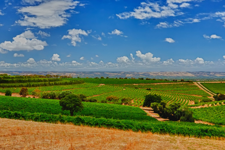 Weinregion McLaren Vale in Südaustralien