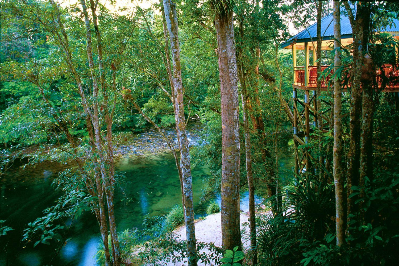 Silky Oaks Lodge Baumhaus