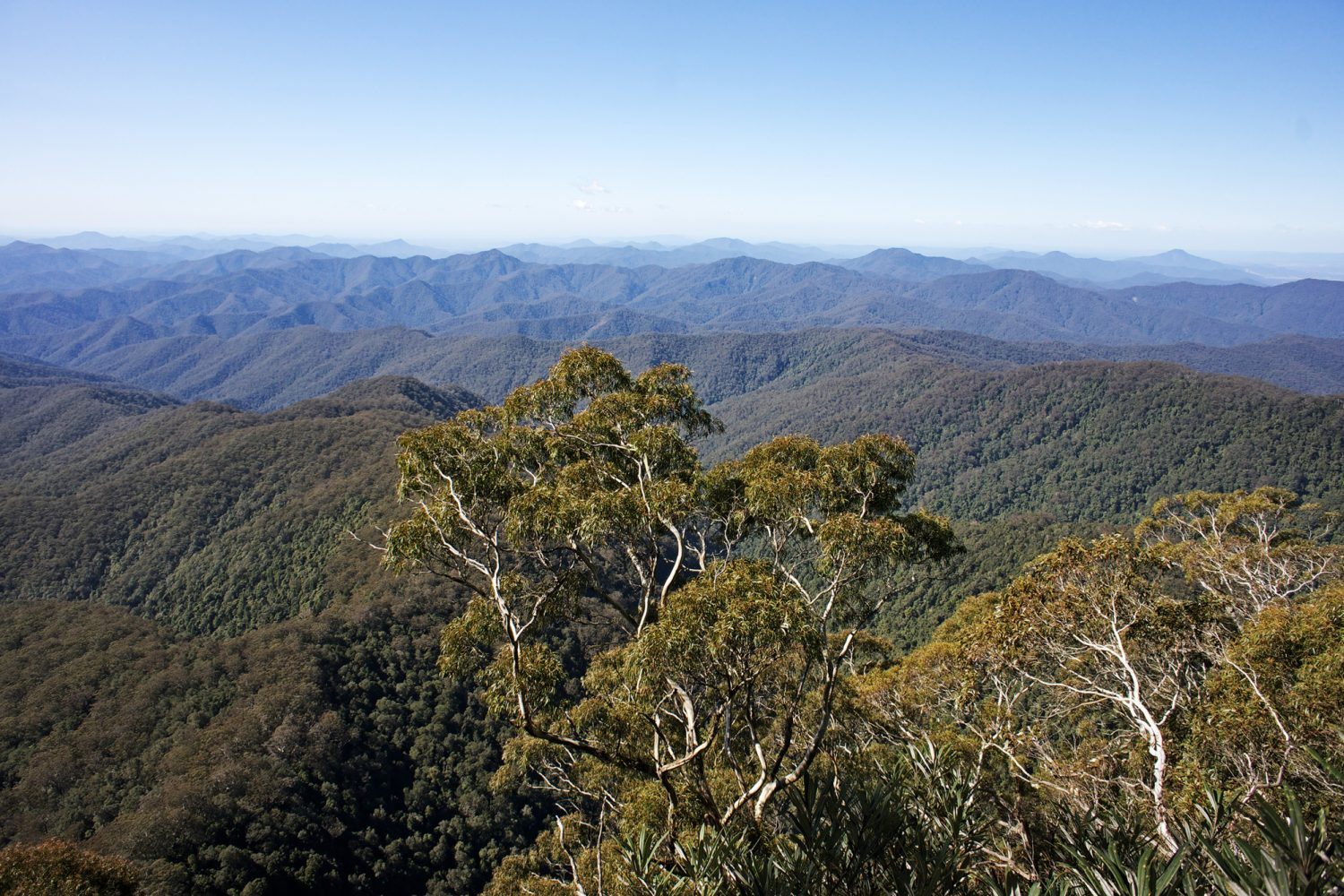 Tenterfield Mountains: Weitblick pur