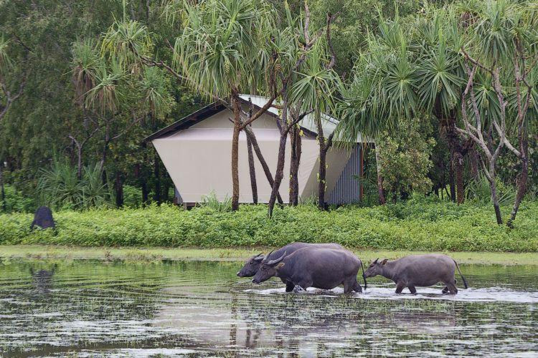 Kakadu: Wasserbüffel und Natur