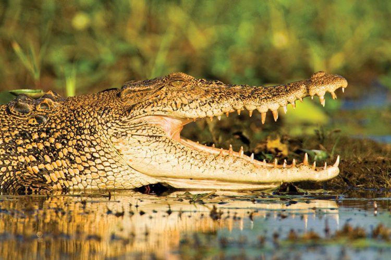 Kakadu Nationalpark: Krokodile