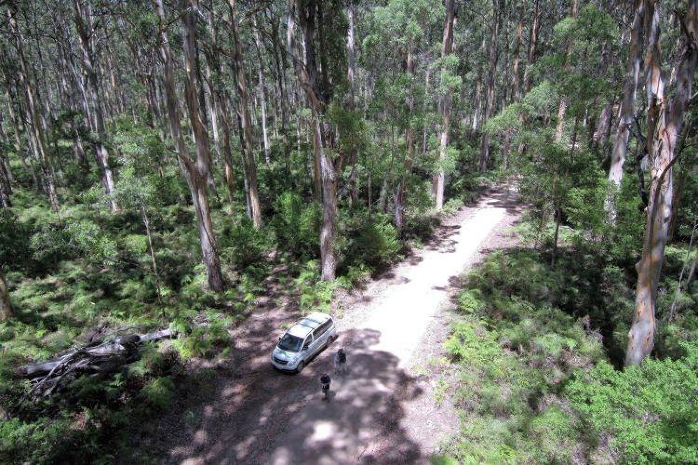 Südwesten Australien: Riesen-Eukalypten