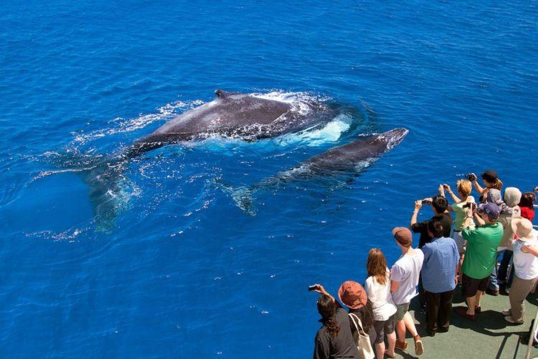 Highlight: Wale beobachten im Südwesten Australiens