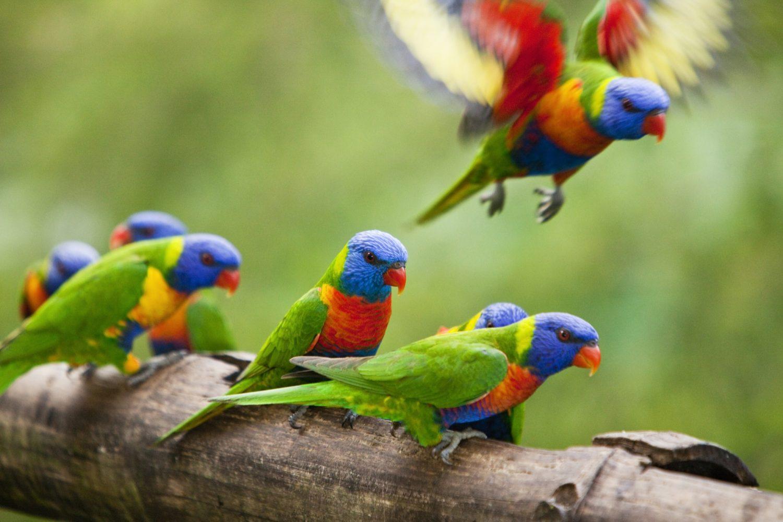 Spot de kleurrijke Rainbow Lorekeet tijdens een verblijf bij Rose Gums Wilderness Retreat