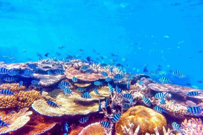 Big Mama Sailing: Bunte Unterwasserwelt