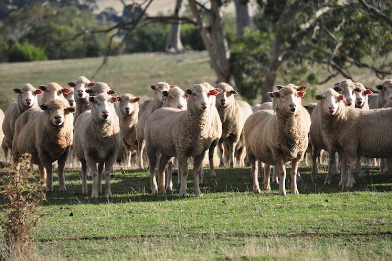 Curringa Farm