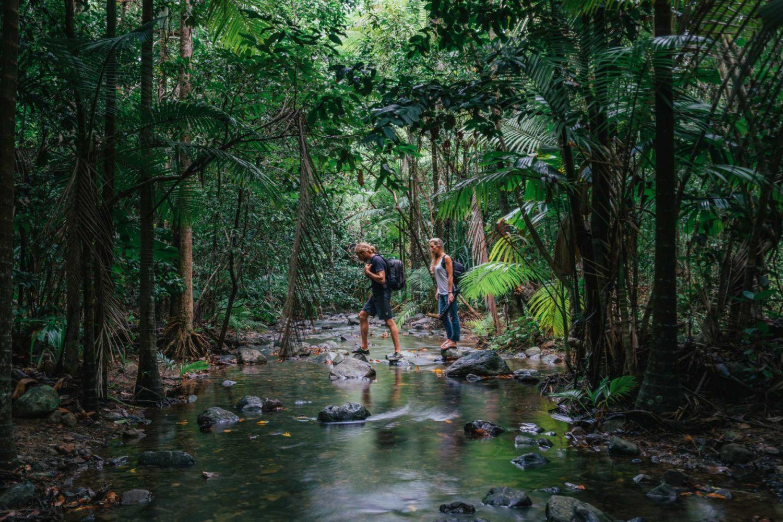 Wandelen door het oudste regenwoud ter wereld