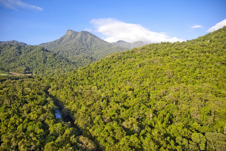 Der Daintree - Regenwald, Lianen, Mangroven, riesige Farne und Orchideen finden sich in dem außergewöhnlich artenreichen Regenwaldgebiet.