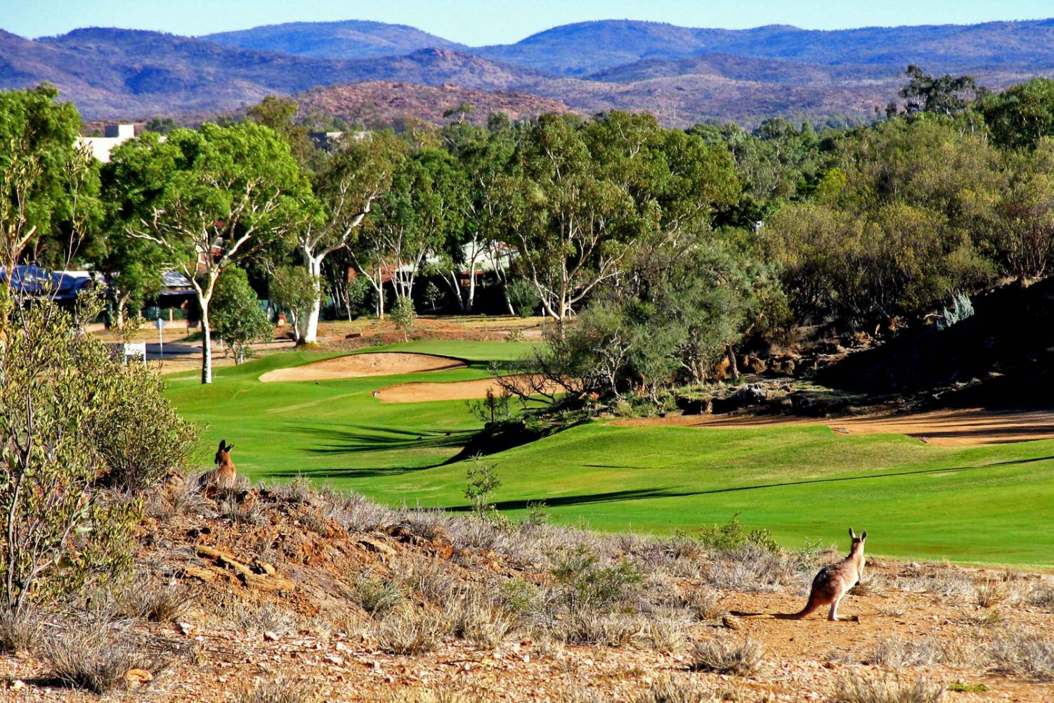 Alice Springs: Desert Palms Resort - Golfplatz