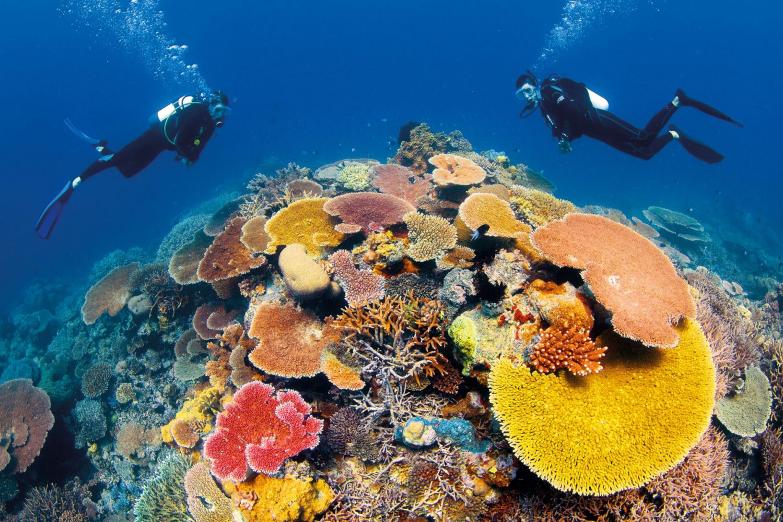 Duiken tijdens uw dagtocht naar het Great Barrier Reef
