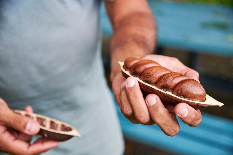 Bush Tucker ist das traditionelle Essen der Aborigines in Australien. Juan zeigt Ihnen was man im Regenwald so alles an Leckereien finden kann.