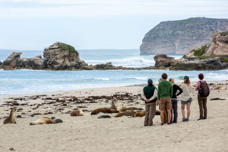 Eine Gruppe von Menschen steht am Strand mit Robben auf Kangaroo Island