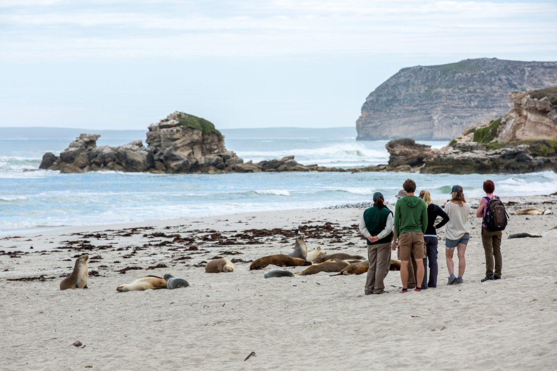 Kangaroo Island - Seehunde in der Seal Bay