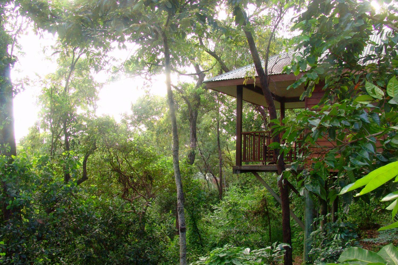 Thala Beach Lodge Baumhaus