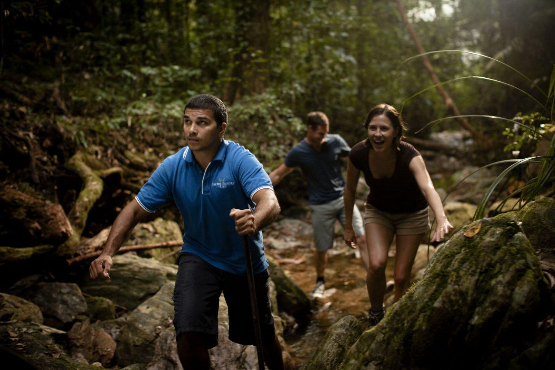 Auf der Aborigine-Erlebnistour erleben Sie den Regenwald im tropischen Queensland.