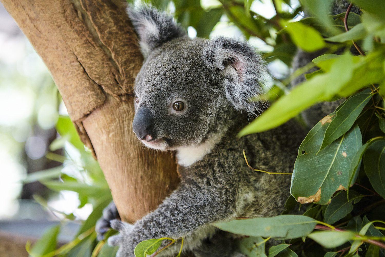 Highlights Australië: Magnetic Island