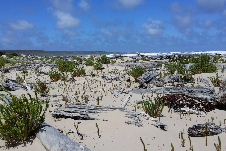 Corinna Wilderness Experience: Strand & Meer