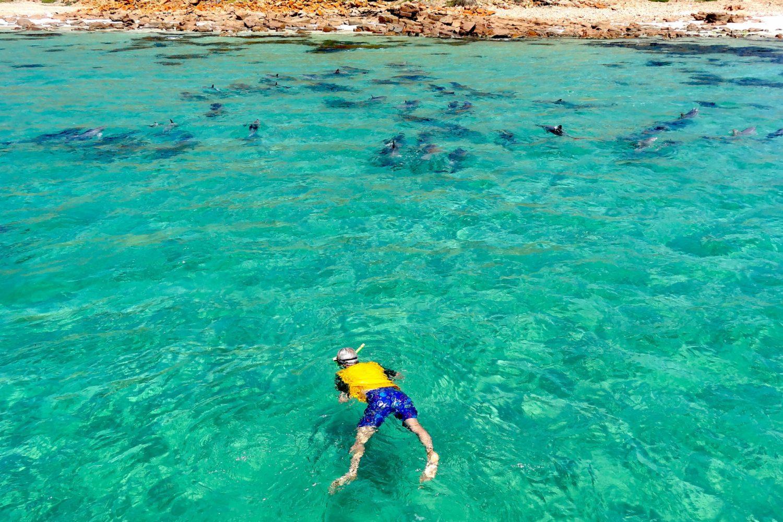 Mit Delfinen schwimmen auf der Kangaroo Island Marine Adventures Tour