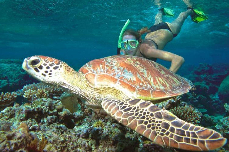 Nicht selten lassen sich Schildkröten beim Schnorcheln entdecken.