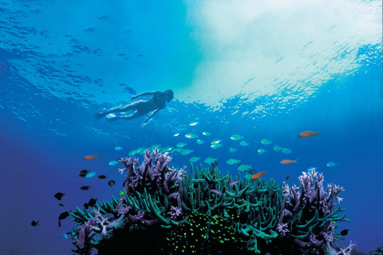 Bekijk het onderwaterleven van het Great Barrier Reef