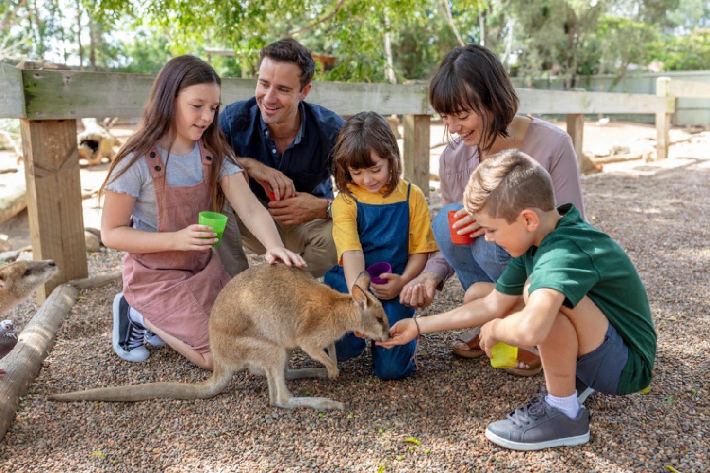 In Sydney selber gibt es viele weitere kinderfreundliche Aktivitäten: Besuchen sie z.B. den Featherdale Wildlife Park in Doonside mit seinem Streichelzoo.