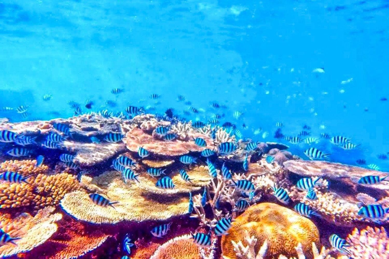 Entdecken Sie das Riff von Magnetic Island während eine Schnorcheltour.