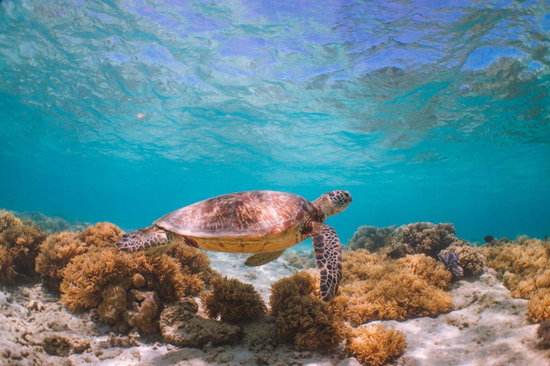 Im größten Korallenriff der Welt und UNESCO-Weltnaturerbe leben 400 Korallenarten und 1.500 Fischarten.