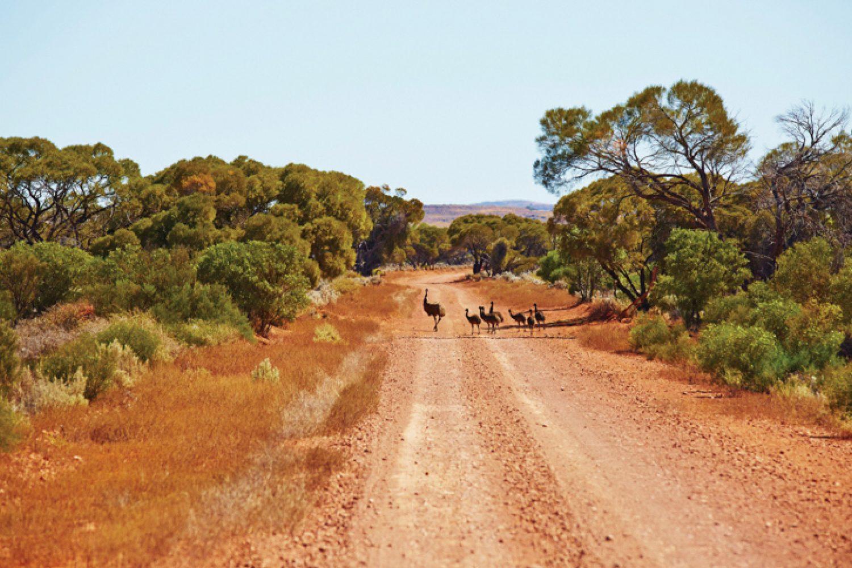 Am ersten Tag auf der Eyre Peninsula werden Sie bei einer Safari-Tour in den Gawler Ranges Emus, Kängurus und Vögel beobachten.