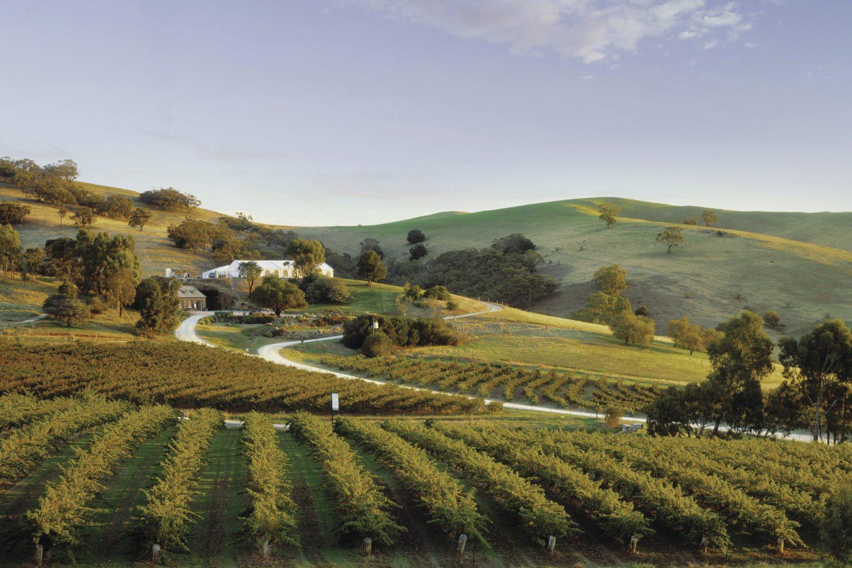 Auf der Weintour genießen Sie neben den hiesigen Weinen auch eine schöne Landschaft.