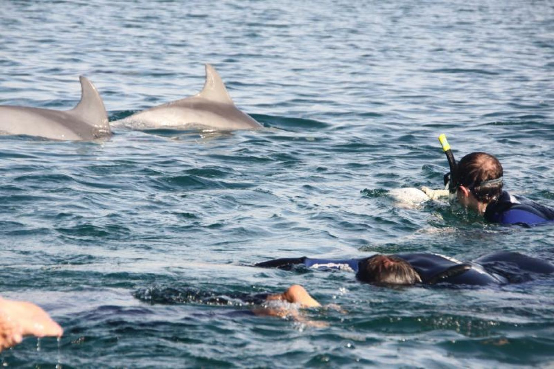 Sie haben die Möglichkeit, die Delfine zu beobachten und sogar mit ihnen zu schwimmen.