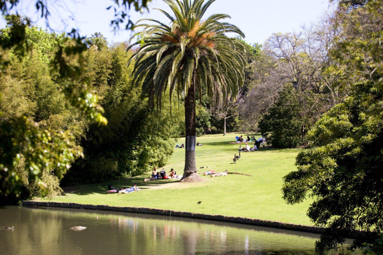 Nicht auslassen sollte man ein Picknick im Royal Botanical Garden.