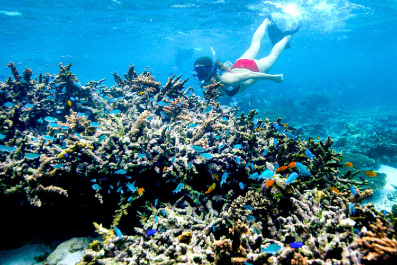 ...können Sie beeindruckende Schnorcheltouren machen und sich einfach entlang des Riffs im Wasser treiben lassen. Das Ningaloo Riff ist mit 250 Kilometer das weltgrößte Saumriff und gehört zum UNESCO-Weltnaturerbe.