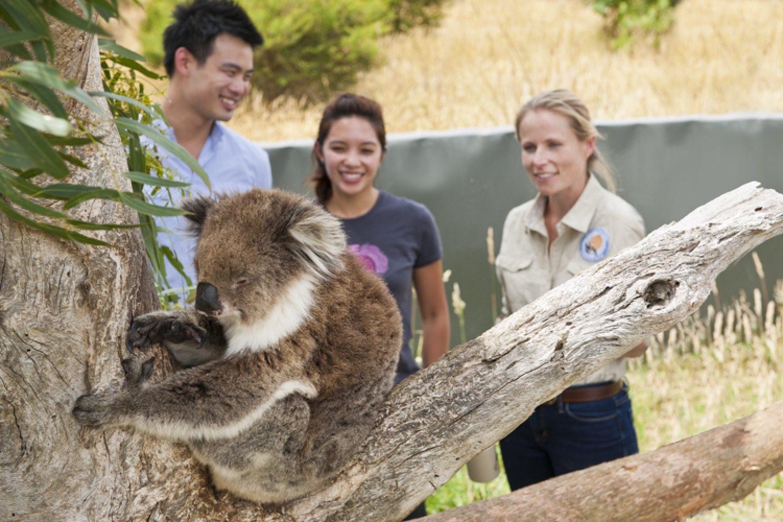 Bei einem Aufenthalt in der Lodge können Sie alleine oder gemeinsam mit einem Guide das umliegende Naturschutzgebiet erkunden. Dabei begegnen Sie Kängurus, Koalas und vielen anderen australischen Tierarten.