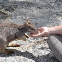 TravelEssence reiservaring Australië - Albert & Desiree