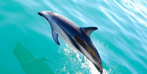 Wildlife spotten in Nieuw-Zeeland