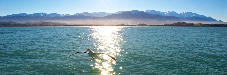 TravelEssence beste reistijd in Nieuw-Zeeland