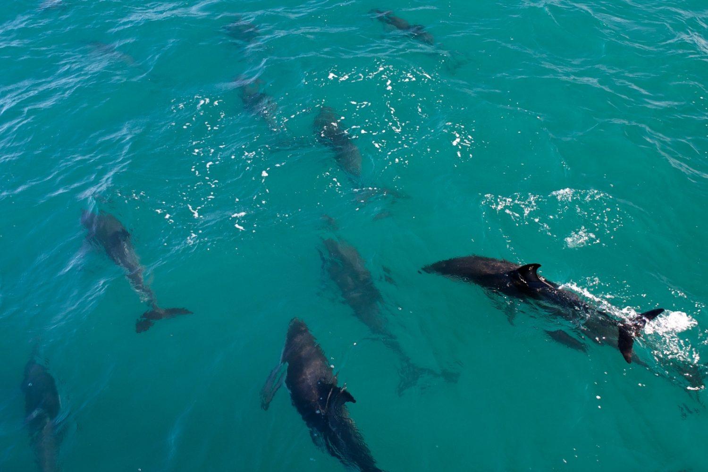 schwimmen mit delfinen in neuseeland travelessence. Black Bedroom Furniture Sets. Home Design Ideas