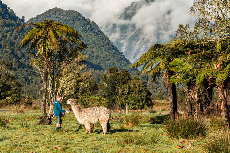 Genießen Sie die spektakuläre Aussicht, die Ruhe, das Vogelgezwitscher und die grasenden Alpakas auf dem Gelände Ihrer Unterkunft.