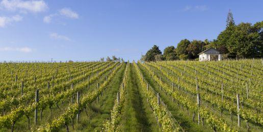 Wijngaarden in Nieuw-Zeeland