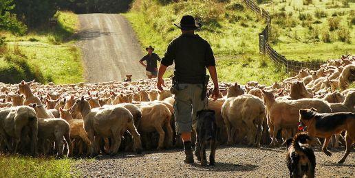 Farm stays in Nieuw-Zeeland