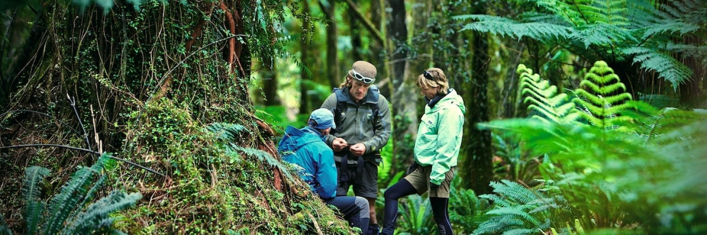 Hollyford Track Wandelen Nieuw Zeeland 1