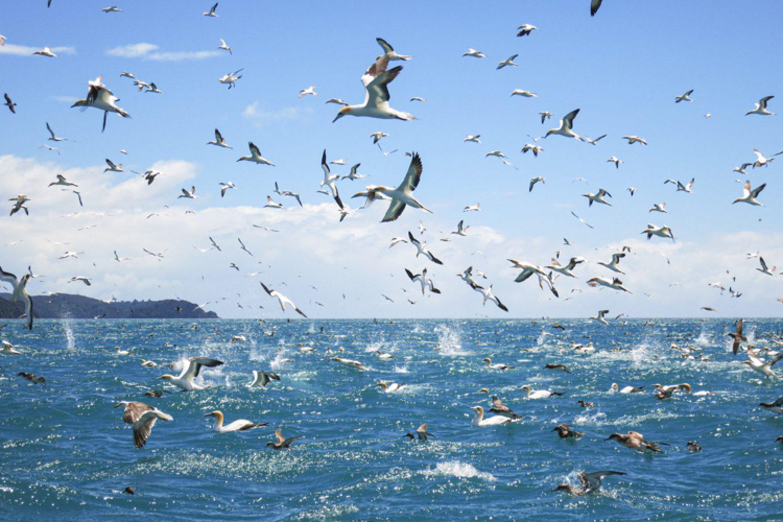 Vom Boot aus beobachten Sie Vögel und Meerestiere im Tonga Island Marine Reserve und erfahren mehr über die Fauna und Flora an den heimischen Küstenstrichen.