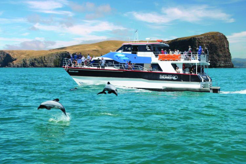 Der Ort Akaroa öffnet sich mit einer lang gezogenen Bucht zum Ozean hin - der ideale Ort, um Delfine in ihrer natürlichen Umgebung zu erleben.