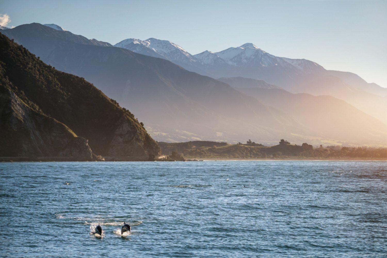 In den Küstengewässern Kaikouras leben Wale, Seerobben und Delfine.