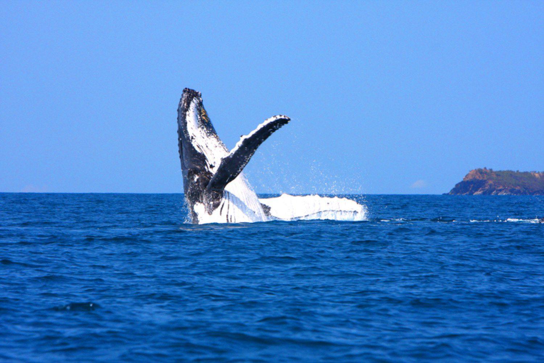 Je nach Jahreszeit beobachten Sie bei Ihrer Bootstour möglicherweise auch Buckelwale, Grindwale, Blauwale und den Südkaper.